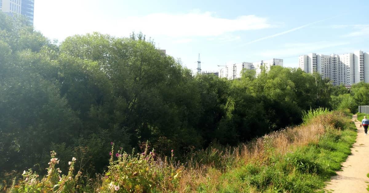Долина реки Грачевка